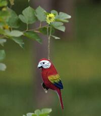 wood parrot