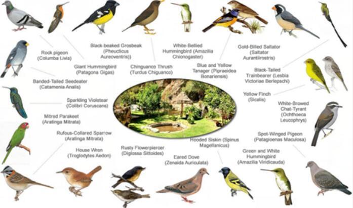 Bird-list-ollantaytambo-001