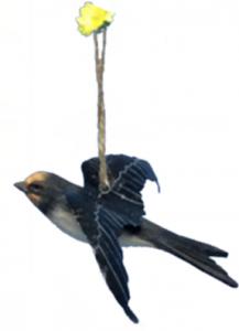 wood Common Swift
