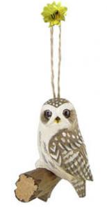 wood little owl